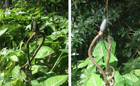 Phút sinh tử giữa nhện và rắn