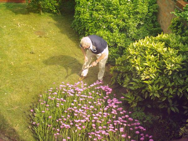 Làm vườn cũng giúp giảm nguy cơ bệnh Alzheimer
