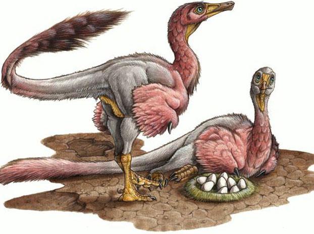 Video: Hóa thạch trứng khủng long tại Patagonia