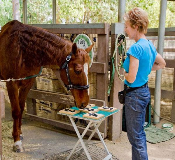 Con ngựa Lukas và chủ nhân Karen Murdock.