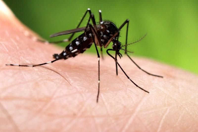 Muỗi hổ châu Á đã xuất hiện khắp hành tinh.