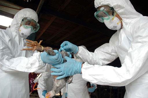 Năm 2020 đại dịch cúm tấn công con người?