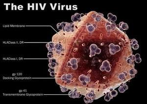 Phát hiện ra phân tử làm lây HIV trong cơ thể người
