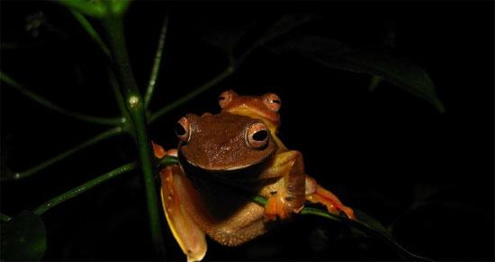 Vào mùa sinh sản (tháng 4-6) chúng thường tập trung với số lượng lớn tại các nhánh cây sát với nguồn nước.