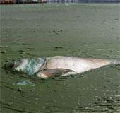 28.000 dòng sông ở Trung Quốc biến mất