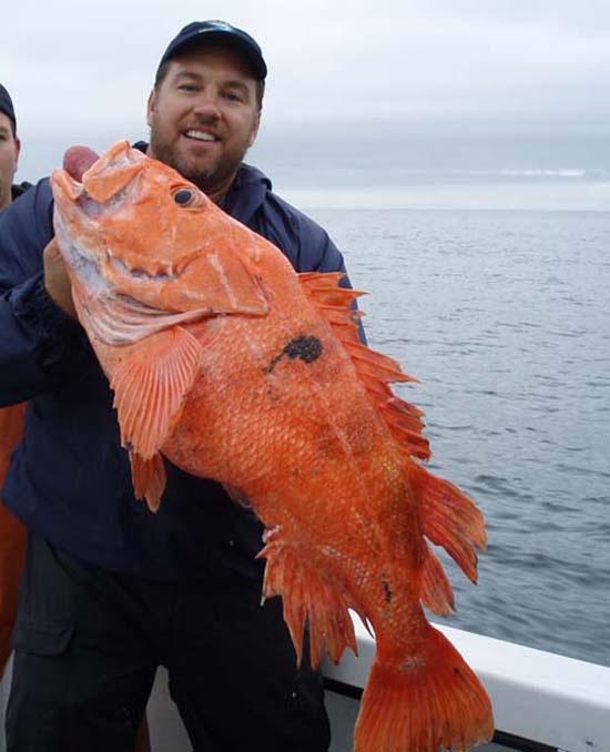 Cá Rougheye