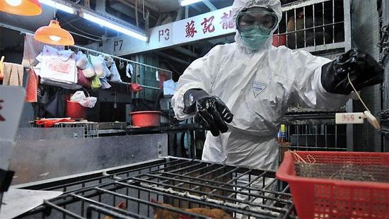 Đã có 2 người Trung Quốc chết vì cúm h7n9