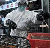 Hai người Trung Quốc chết vì cúm gia cầm H7N9