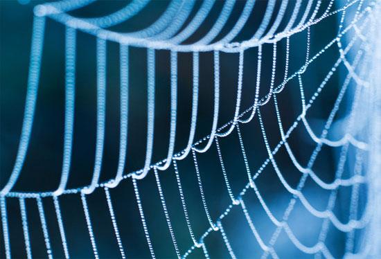 Dùng phần mềm xác định danh tính loài nhện mới