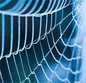 Xác định loài nhện thông qua phần mềm
