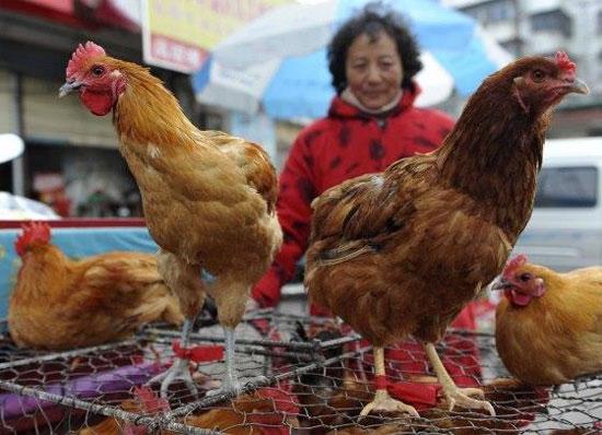 Số ca mắc cúm gia cầm H7N9 tại Trung Quốc đã lên 7 người.