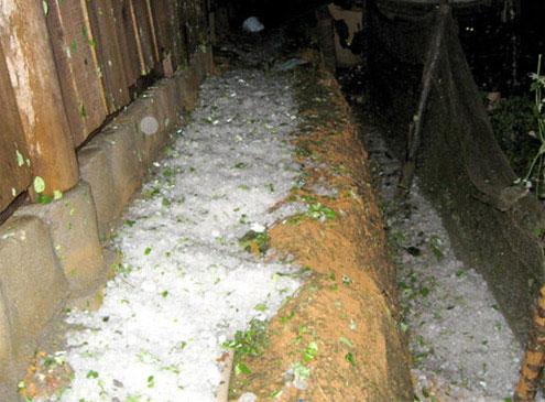 Những hạt mưa đá vẫn còn la liệt trên mặt đất Lào Cai nhiều giờ sau khi mưa tạnh.