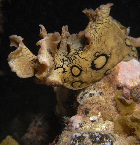 Chất nhầy do sên biển tiết ra là nhằm ngăn cản kẻ thù truy đuổi chúng.