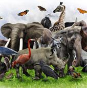 Liệu sinh học tổng hợp có bảo vệ được cuộc sống hoang dã?