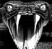 Bản năng săn mồi của loài rắn