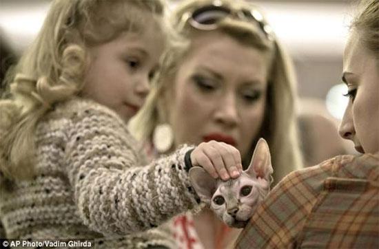 Sống tại các nước có thời tiết lạnh nhưng mèo nhân sư hầu như không có lông trên bao phủ cơ thể ngoại trừ một lớp lông rất mỏng mọc trên mặt.