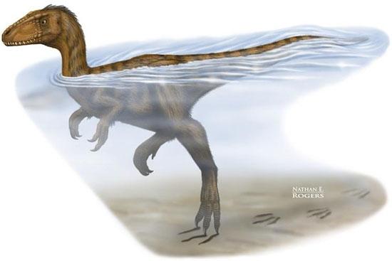 Tư thế bơi khá hoạt kê của khủng long thời xưa