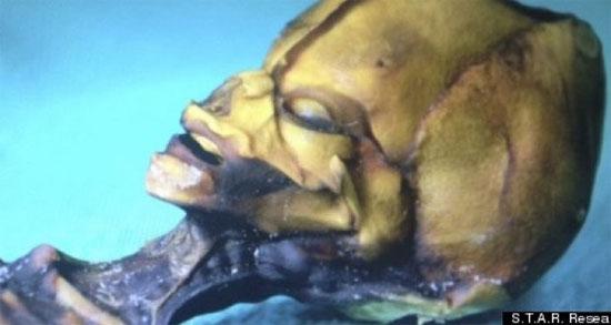 """Hộp sọ của """"sinh vật ngoài hành tinh"""" khá dài."""