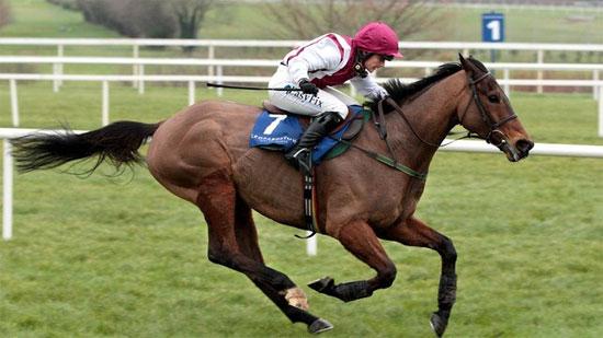 Seabass, chú ngựa được đánh giá sẽ về nhất năm nay theo chuyên gia Anh
