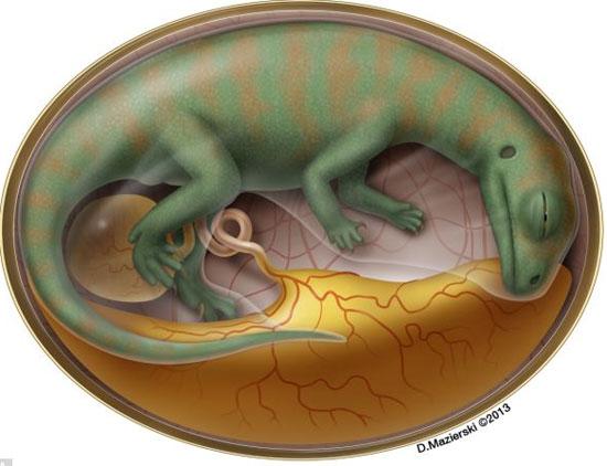 Bào thai khủng long theo mô tả của tiến sỹ Mazierski, trường đại học Toronto, Canada.