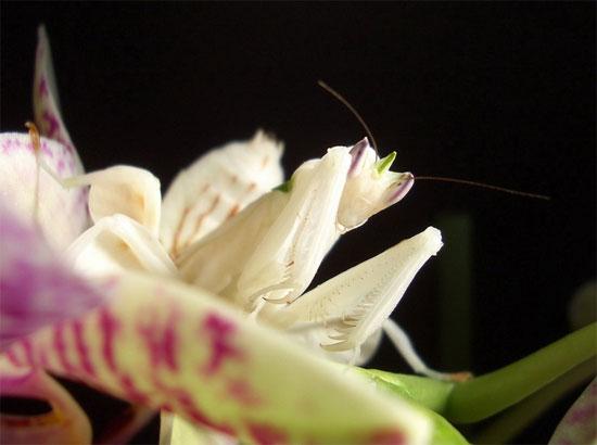 Chúng sinh sống trong các khu rừng nhiệt đới của khu vực Đông Nam Á, trong đó có Việt Nam.