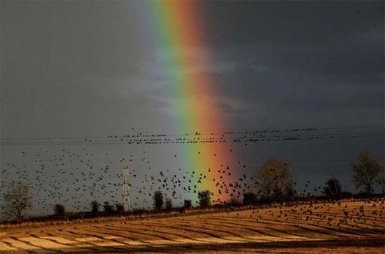 Các nhà khoa học cho rằng những chú chim sáo này bay theo đàn vì mục đích an toàn, để giữ ấm và để tiện liên hệ với nhau.