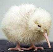 Những kỷ lục khó tin của các loài chim
