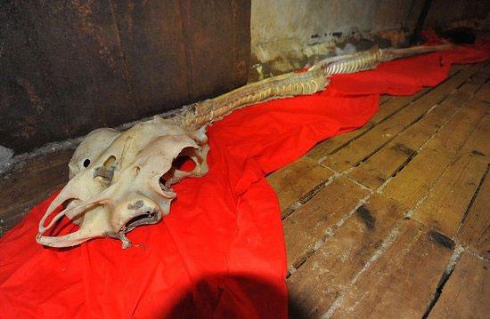 Bộ xương hóa thạch được tìm thấy ở Trung Quốc.
