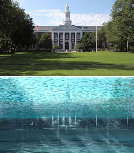 Khuôn viên Đại học Havard lừng danh sẽ trở thành một bể bơi.