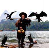 Kỳ lạ cảnh ngư dân đánh cá bằng... chim cốc
