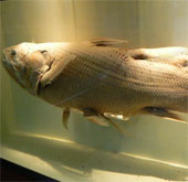 Làm rõ quá trình tiến hóa động vật dưới nước lên cạn
