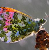 Cánh bướm đẹp như tranh
