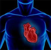 """Phát hiện gene làm """"tan nát"""" trái tim"""