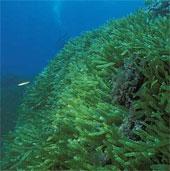 Nhật Bản sẽ thúc đẩy phát triển tài nguyên dưới biển