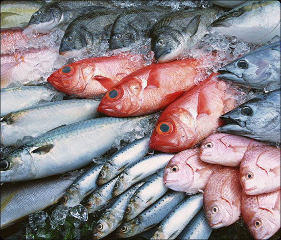 Cá tươi không phải lúc nào cũng tốt cho sức khỏe hơn so với cá đông lạnh