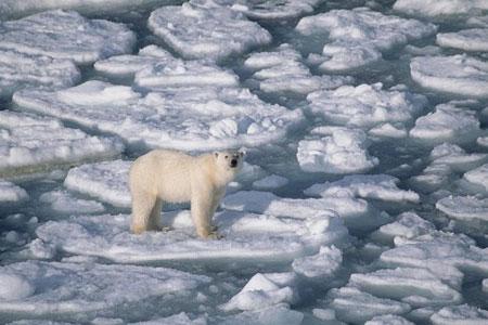 Sự ấm lên ở Bắc Cực sẽ tác động tới Việt Nam