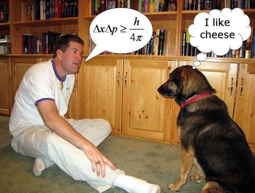 """""""Chú chó biết nói"""" gây chú ý trên Youtube"""
