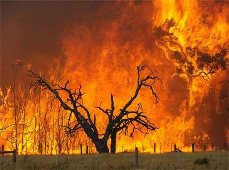 Cháy rừng lan rộng vượt ngoài kiểm soát tại Anh