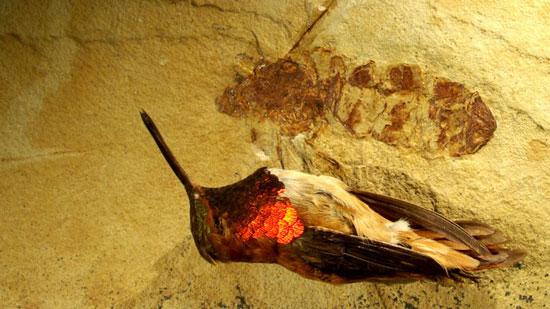 Nghiên cứu sự ấm lên toàn cầu qua hóa thạch kiến