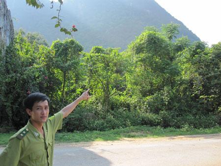 Khu vực rừng Khe Môn, nơi được cho là có rắn khổng lồ sinh sống.