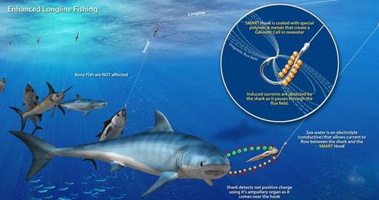 Lưỡi câu thông minh giúp xua cá mập
