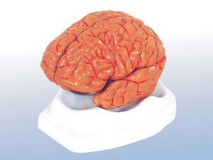 Não người nhân tạo sẽ ra đời trong 10 năm tới