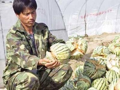 """Chưa phát hiện """"dưa hấu nổ"""" ở Việt Nam"""