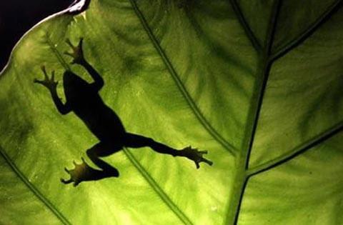 Thế giới mới biết gần 2/3 các loài lưỡng cư