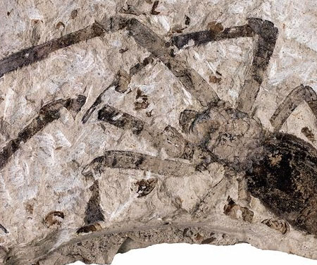Video: Hóa thạch nhện 49 triệu năm tuổi