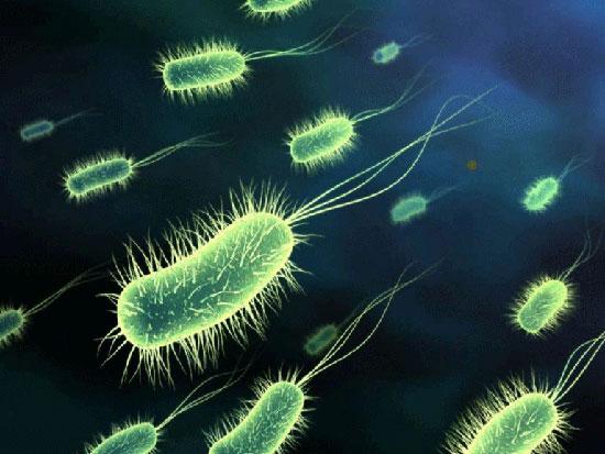 Xác định động vật ăn cỏ, ăn thịt thông qua vi khuẩn đường ruột