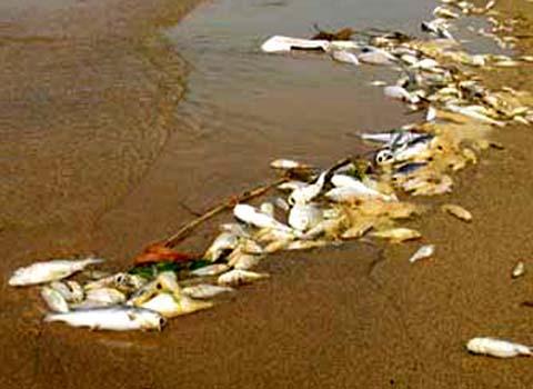 Ô nhiễm nước khiến dân mất kế sinh nhai