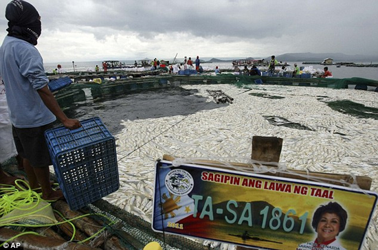 800 tấn cá măng chết bí ẩn