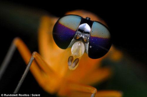 """Tuyệt đẹp những côn trùng... """"ngoài hành tinh""""!"""
