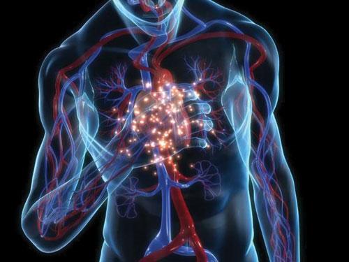 Phát hiện mới mở ra hy vọng điều trị tổn thương tim ở người